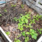 Compost en bacs